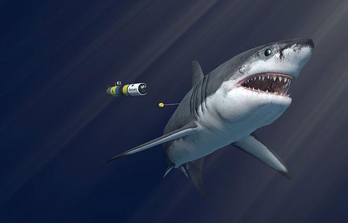 sharkCam700_298195